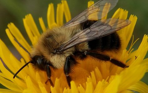 Honeybees are more than pollinators; they are a micro-sized terrorism fighting unit.