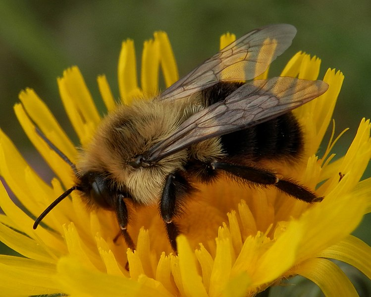 Honeybees+are+more+than+pollinators%3B+they+are+a+micro-sized+terrorism+fighting+unit.