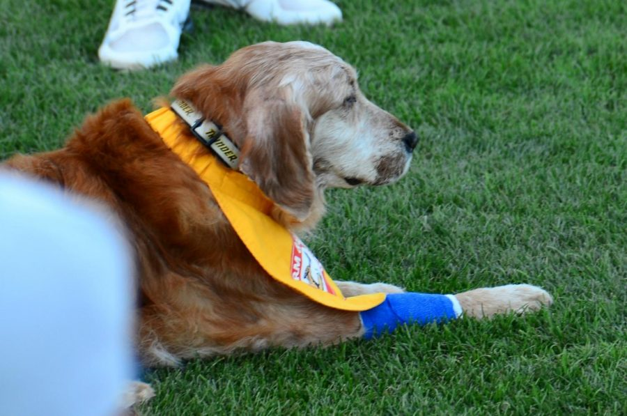 The Trenton Thunder are also known for their bat dogs, including Chase.