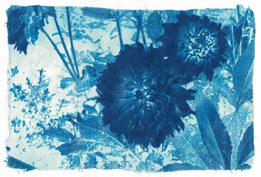 Cyanotype Photography example
