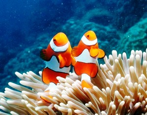 The Great Barrier Reef is not only an oxygen producer but also the home to a variety of ocean species.