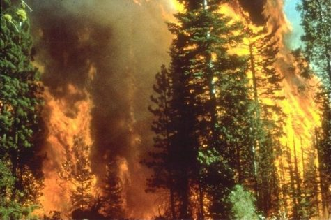 The California Wildfires of 2020 are just one symptom of global climate change.